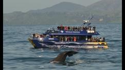 whale-watch-kaikoura