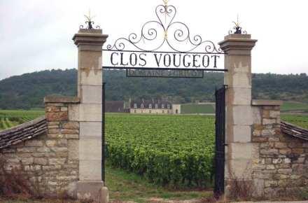 O vinhedo de Clos Vougeot