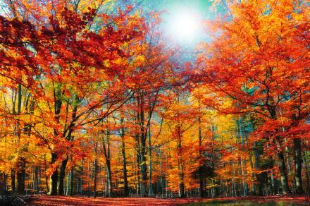 Outono na Alsacia
