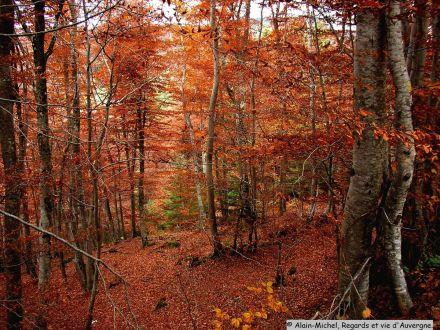 Outono na Auvergne