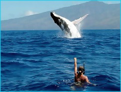 baleine-et-plongeur-tahiti