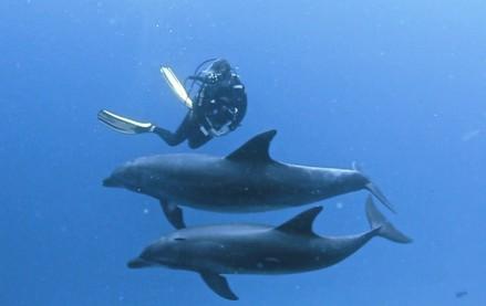 Dancando com os golfinhos, foto de Corinne Bourbeillon