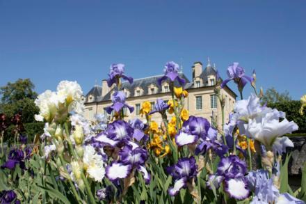 Castelo de Auvers sur Oise e seus famosos Íris