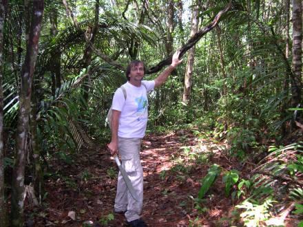 Trilhas na mata da Guiana