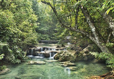 O Shinrin Yoku, banho de floresta japonês